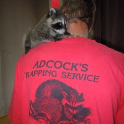 Raccoon Problems in Maryland, Washington DC and Northern Virginia
